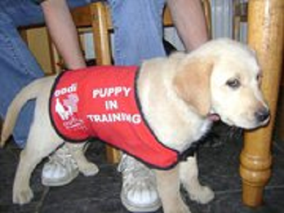 service dogs for autism essay Sixty years ago autism was nothing more than an unrecognized developmental delay generally 8 questions to ask your autism service provider autism jargon.